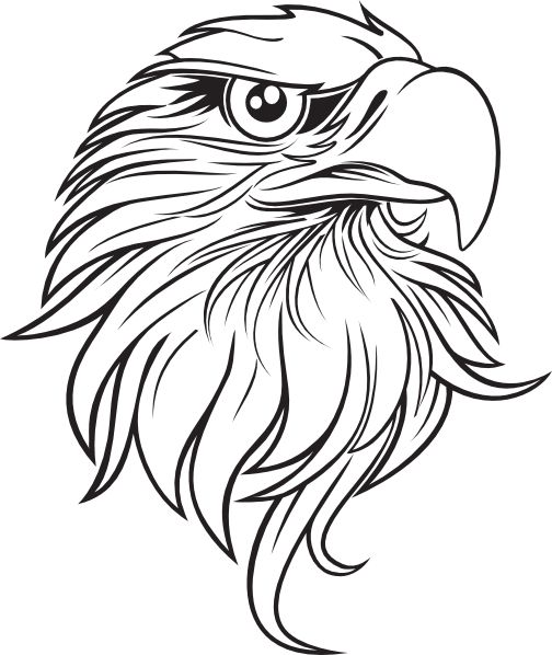 504x598 Pictures Black And White Eagle Sketch,