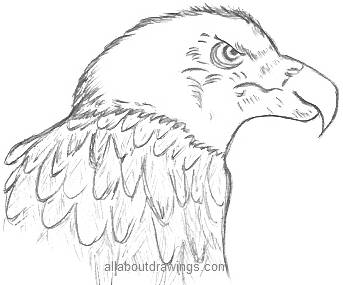 343x285 Powerful Eagle Pencil Drawings