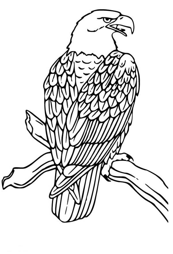 600x879 Bald Eagle Drawing Coloring Page