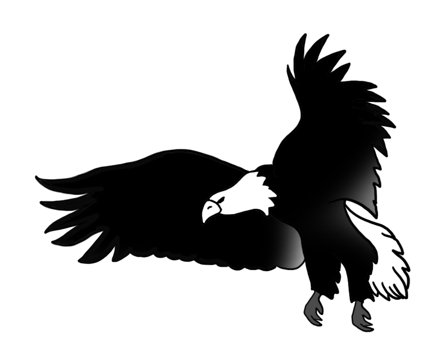 Eagle Black And White Drawing At Getdrawings Com Free For