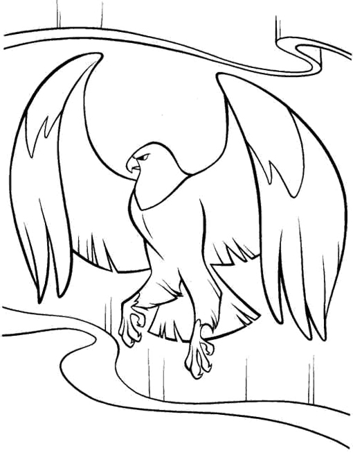 510x653 Cartoon Eagle Coloring Pages Colouring