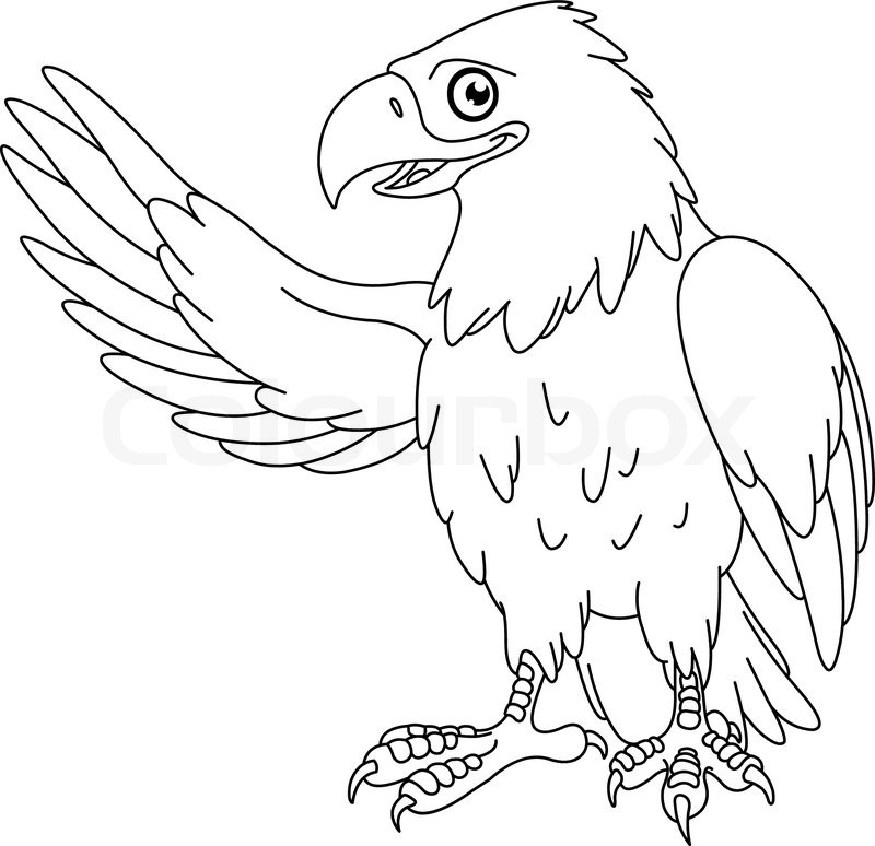800x774 Outlined American Bald Eagle Stock Vector Colourbox