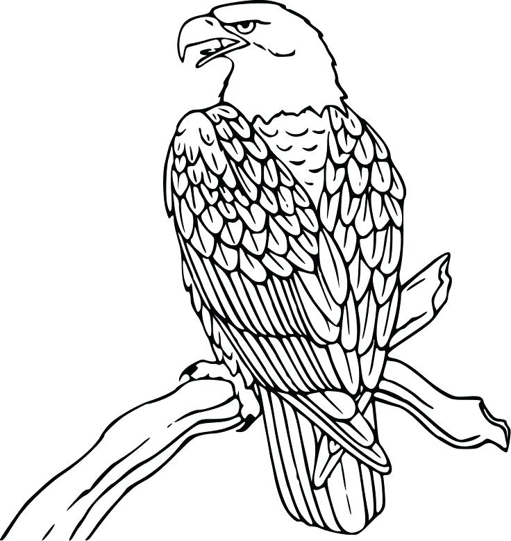 736x779 Beautiful Eagle Coloring Page Online Best Pages Images On Books