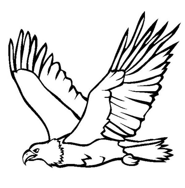 600x610 Great Flying Bald Eagle Coloring Page
