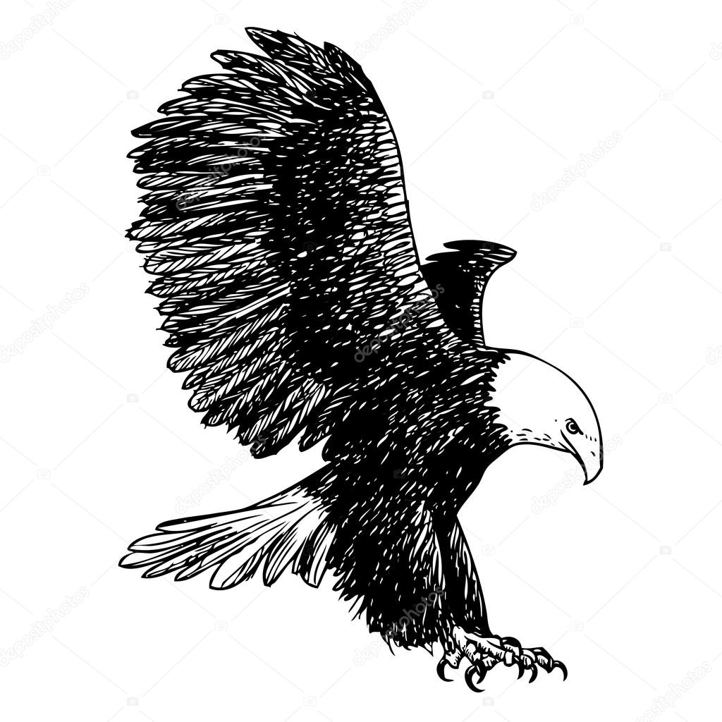 1024x1024 Freehand Sketch Illustration Of Eagle, Hawk Bird Stock Vector