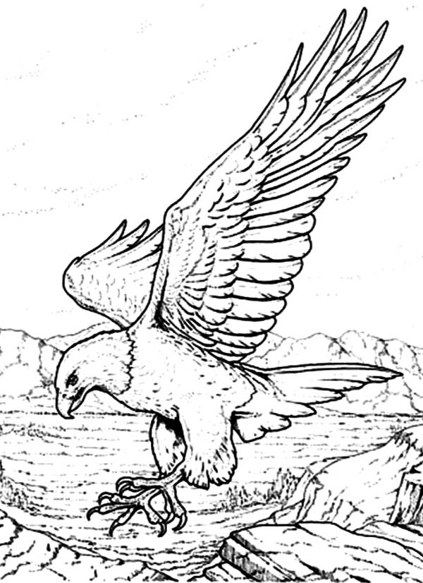 600x826 Bald Eagle With Sharp Claws Coloring Page