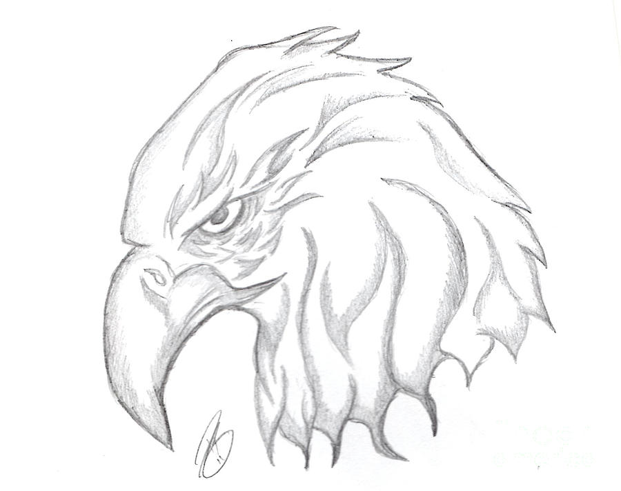 900x712 Eagle Head Drawing Drawing By Minding My Visions By Adri And Ray