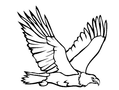 484x367 Bald Eagle Coloring Page Drawing Board Weekly