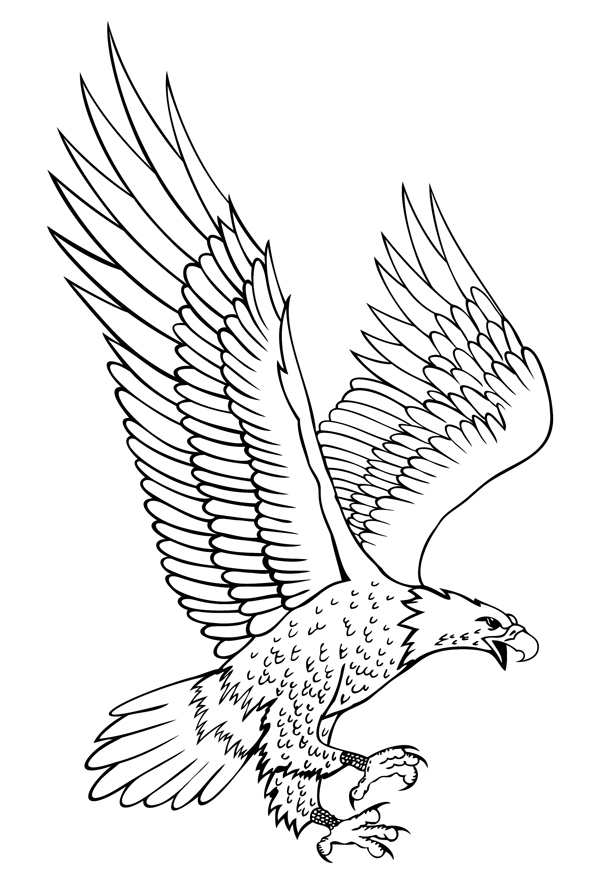 600x884 Image Result For Eagle Drawings Eagle Wood Signs