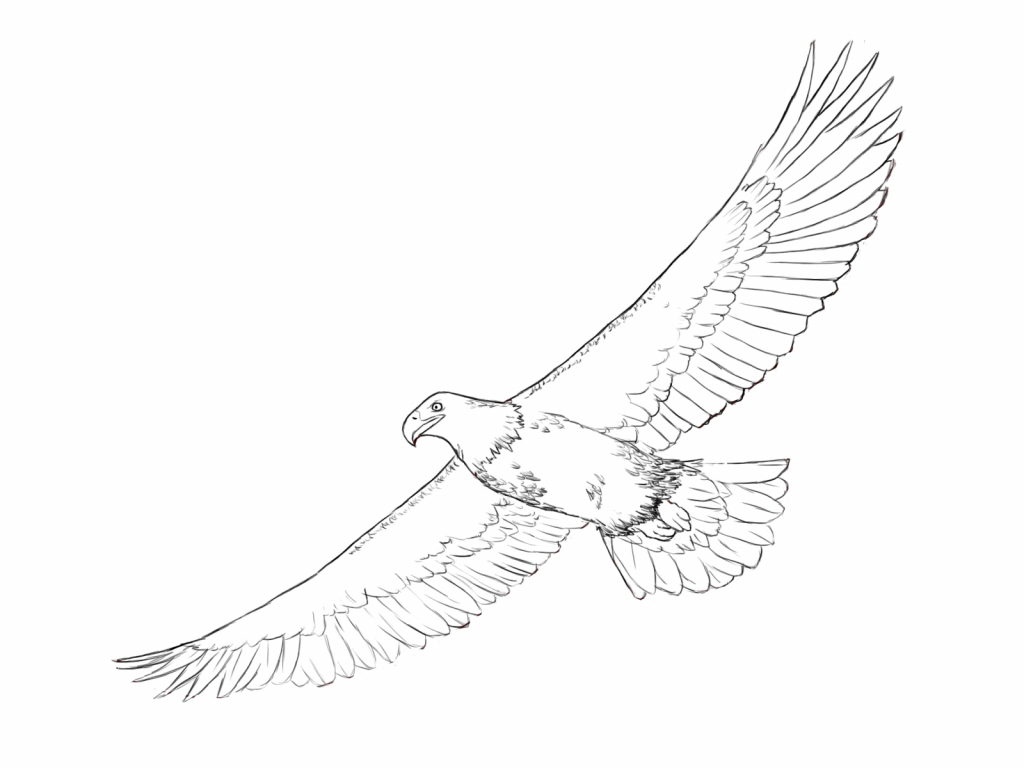 1024x768 Simple Eagle Drawings