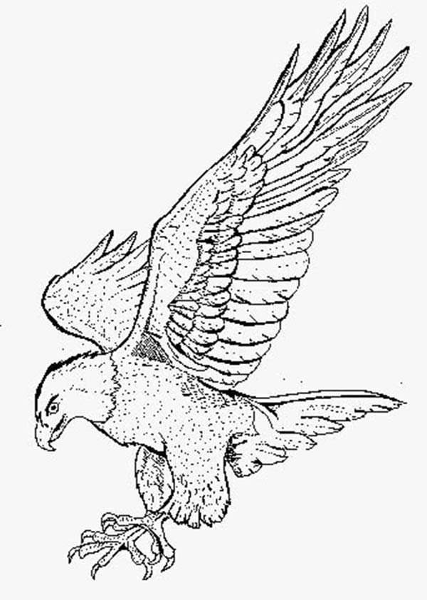 600x842 Smooth Landing Bald Eagle Coloring Page