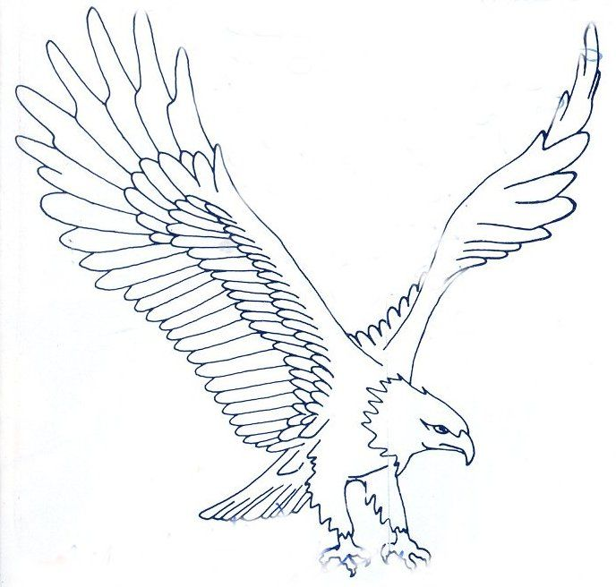 688x656 Sketches Of Eagle Best 25 Eagle Sketch Ideas On Eagle