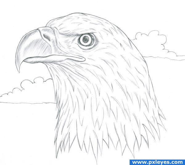 600x535 Drawing Contest Pictures Of Eagle