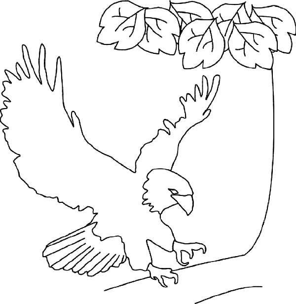 600x616 Bald Eagle Lands On Tree Branch Coloring Page