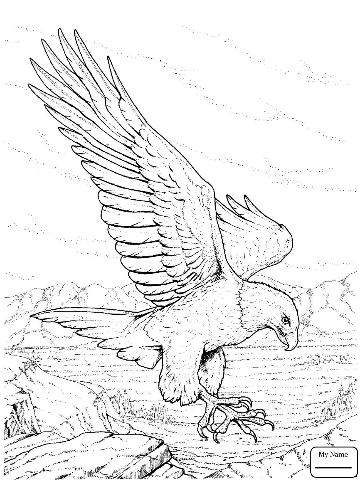 1224x1632 Coloring Pages For Kids Cartoon Bald Eagle Eagle Birds