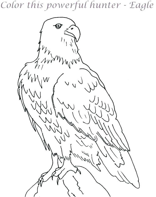 618x780 Eagle Picture To Color Eagle Color Page Bald Eagle Coloring Pages