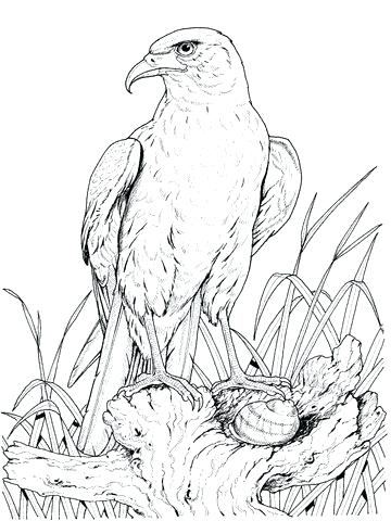 360x480 Eagle Color Page Drawing Flying Eagle Coloring Page Harpy Eagle