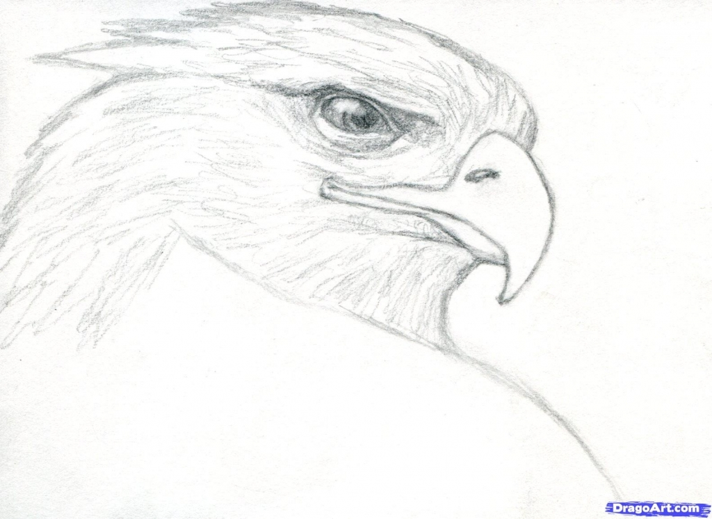 1024x746 Realistic Eagle Drawing How To Draw A Realistic Eagle Golden Eagle