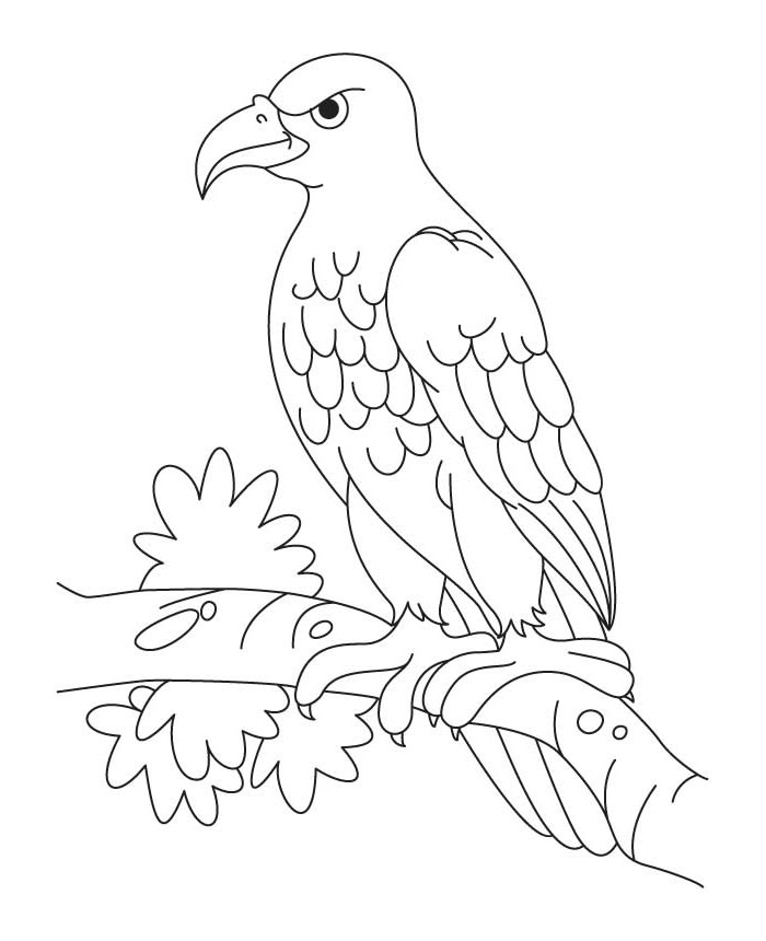 Eagle Drawing Outline at GetDrawings.com | Free for personal use ...
