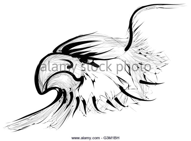 640x473 Golden Eagle Black And White Stock Photos Amp Images