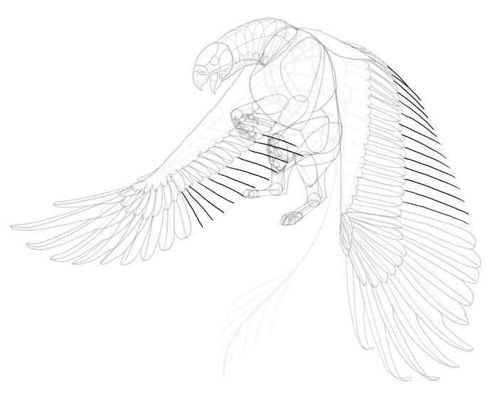 700x567 How To Draw A Griffin