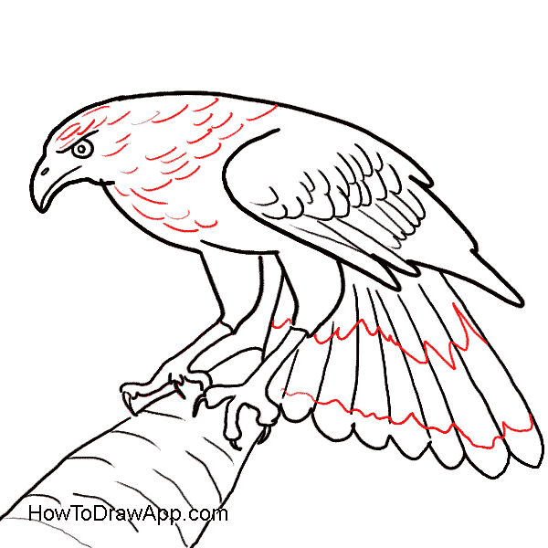 600x600 How To Draw An Easy Eagle By Steps