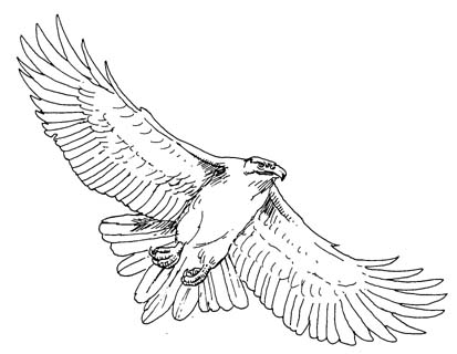 Eagle Flying Drawing