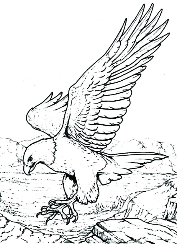 600x826 eagle coloring pages bald eagle coloring page eagle football - Coloring Page Eagle