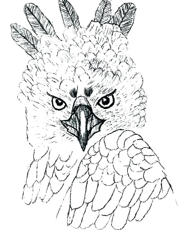 600x769 Eagle Coloring Page Eagle Coloring Pages Eagle Head Coloring Pages