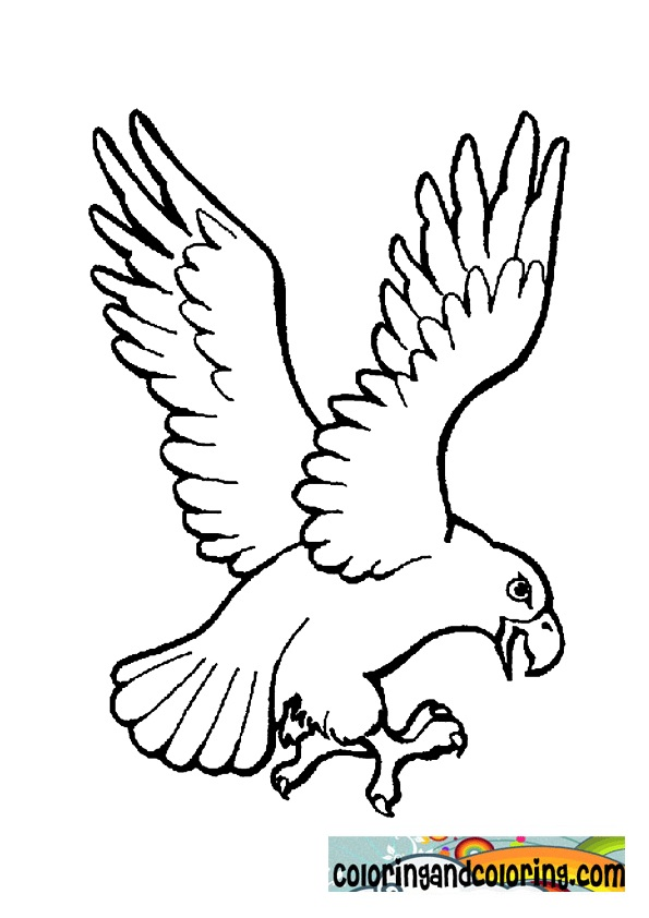 595x842 Eagle Coloring Pages
