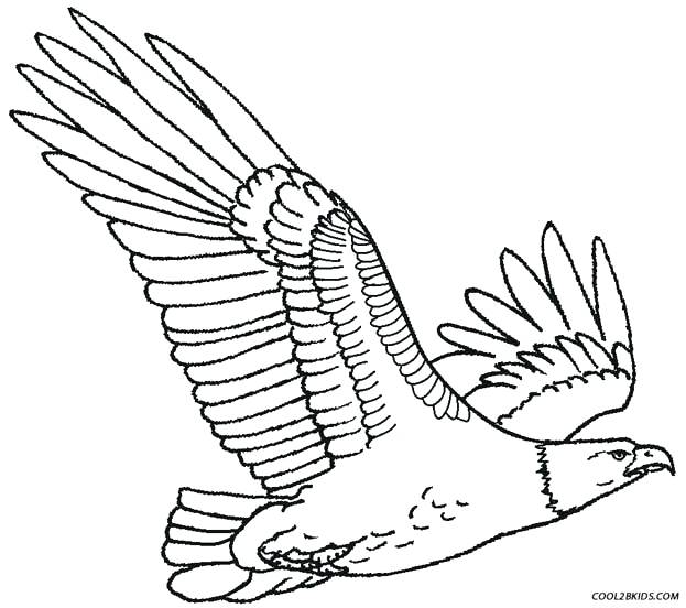 623x552 Eagle Coloring Sheet Bald Eagle Coloring Bald Eagle Coloring Page