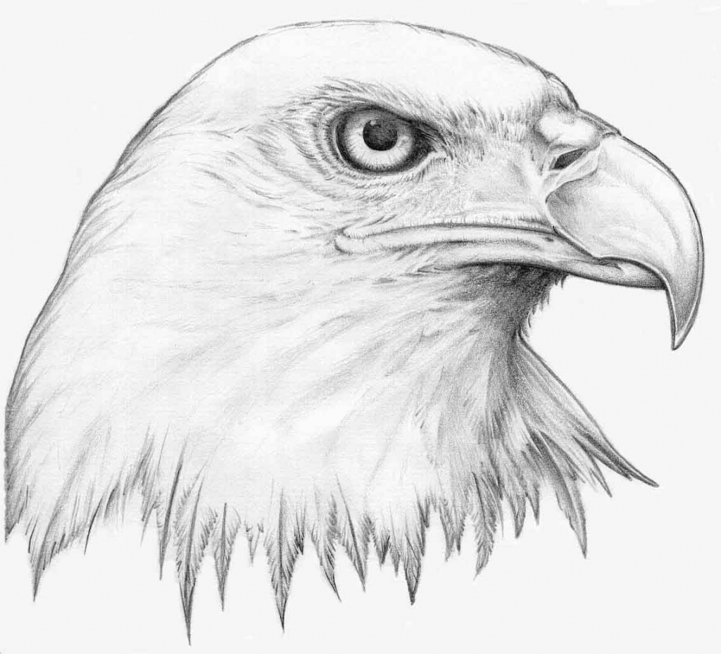 1024x929 How To Draw A Eagle For Kids Eagle Drawing Lesson Step By Step