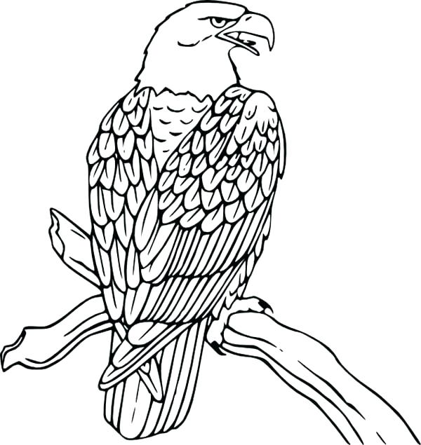 600x635 Coloring Page Of An Eagle