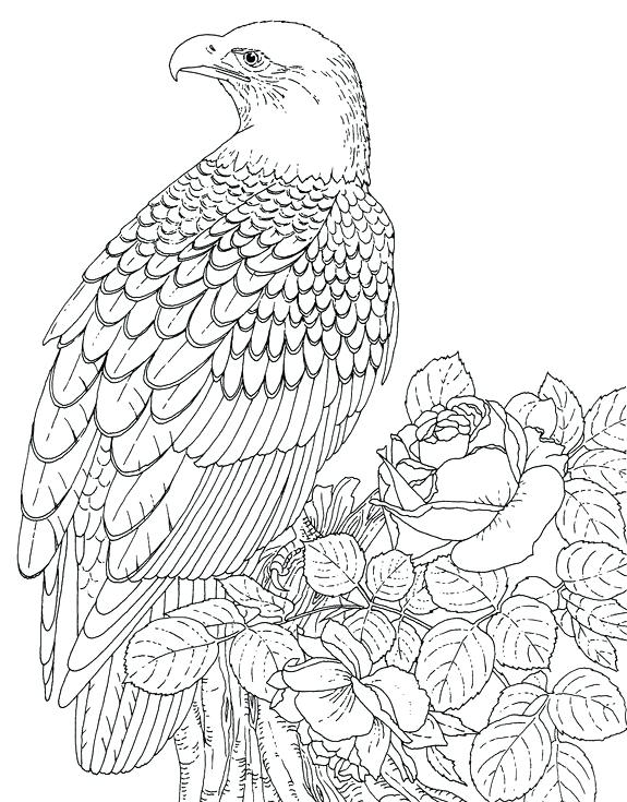 575x735 Eagle Color Page Drawing Flying Eagle Coloring Page Harpy Eagle