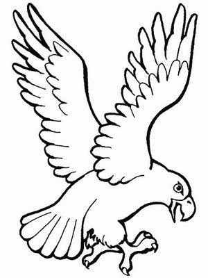 300x400 Little Eagles Gold Coast Eagles F.c.