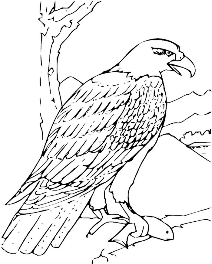 Eagle Outline Drawing