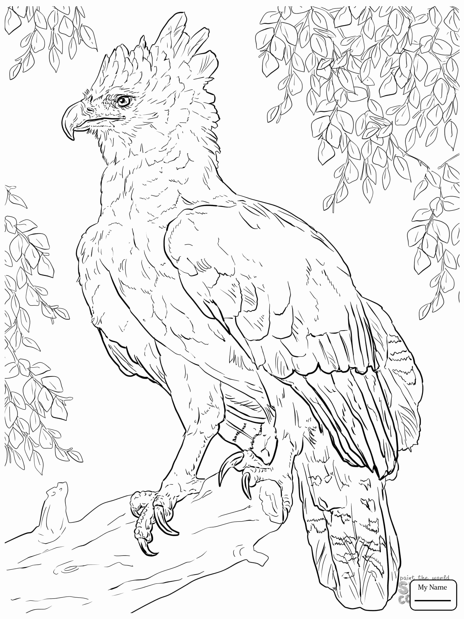 Eagle Simple Drawing