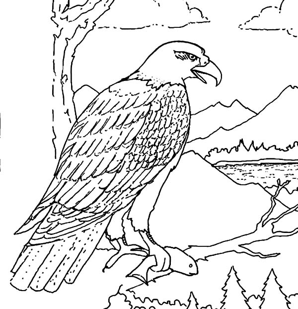 600x622 Hungry Bald Eagle Eat Coloring Page