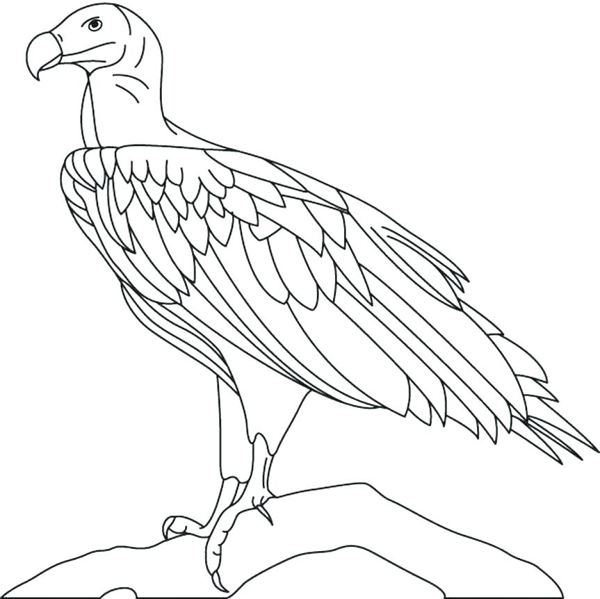 863x862 Bald Eagle Coloring Page Eagles Coloring Pages Pin Bald Eagle Line