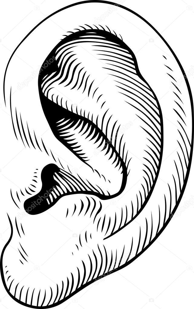 641x1023 Ear Stock Vectors, Royalty Free Ear Illustrations