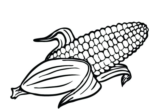 photo regarding Corn Printable titled Ear Of Corn Drawing at  Cost-free for specific
