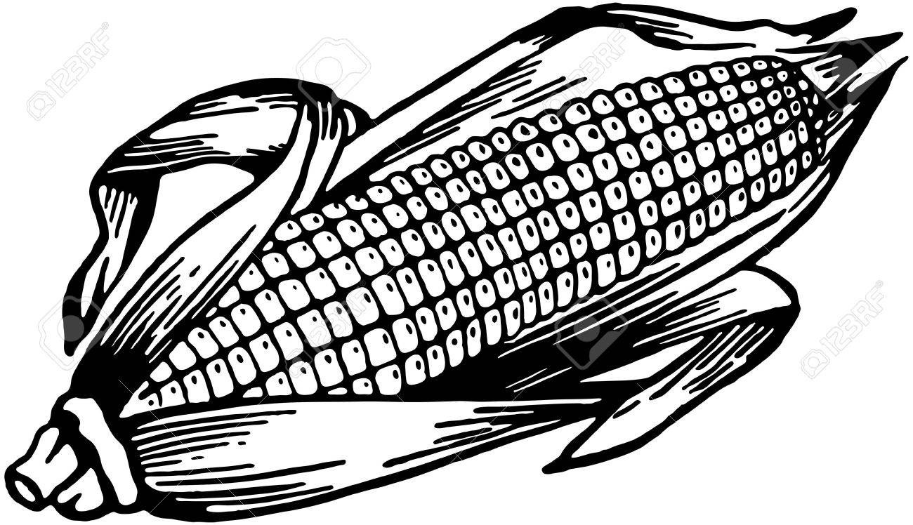 1300x748 Ear Of Corn Royalty Free Cliparts, Vectors, And Stock Illustration