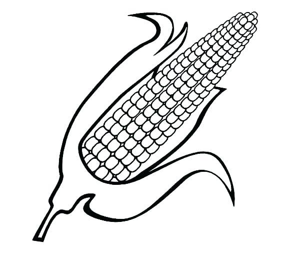 600x525 Ear Of Corn Coloring Page Slavyanskiy.club