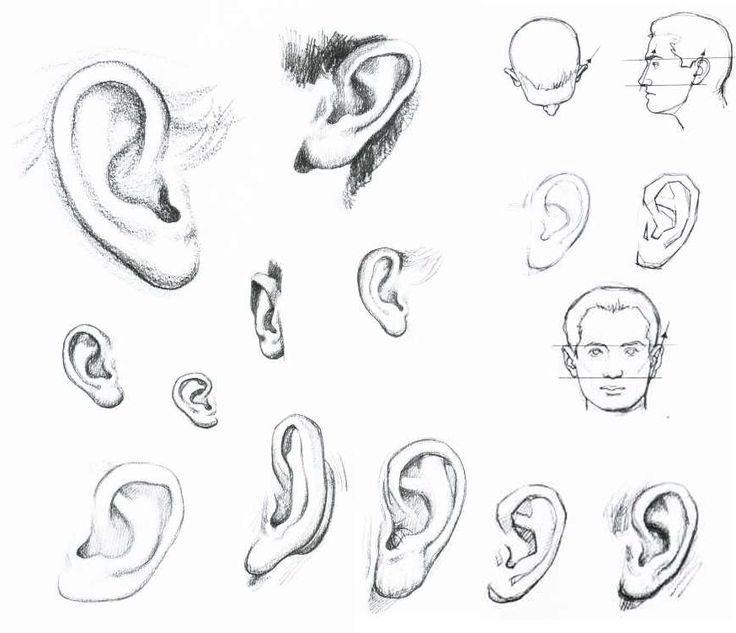 Ears Drawing