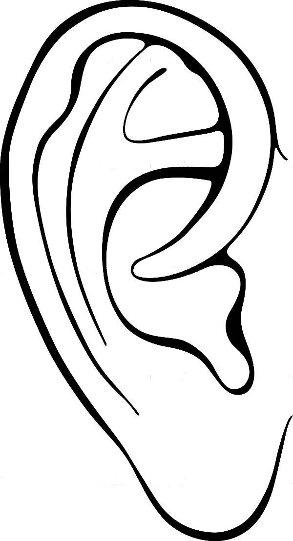 600x1109 Color Book Human Ear Human Ear Drawing