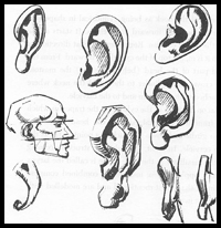 200x206 How To Draw Ears And The Human Face Drawing Tutorials Amp Drawing