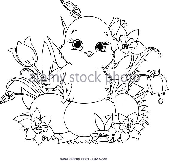 565x540 Easter Chick Coloring Page Stock Photos Amp Easter Chick Coloring