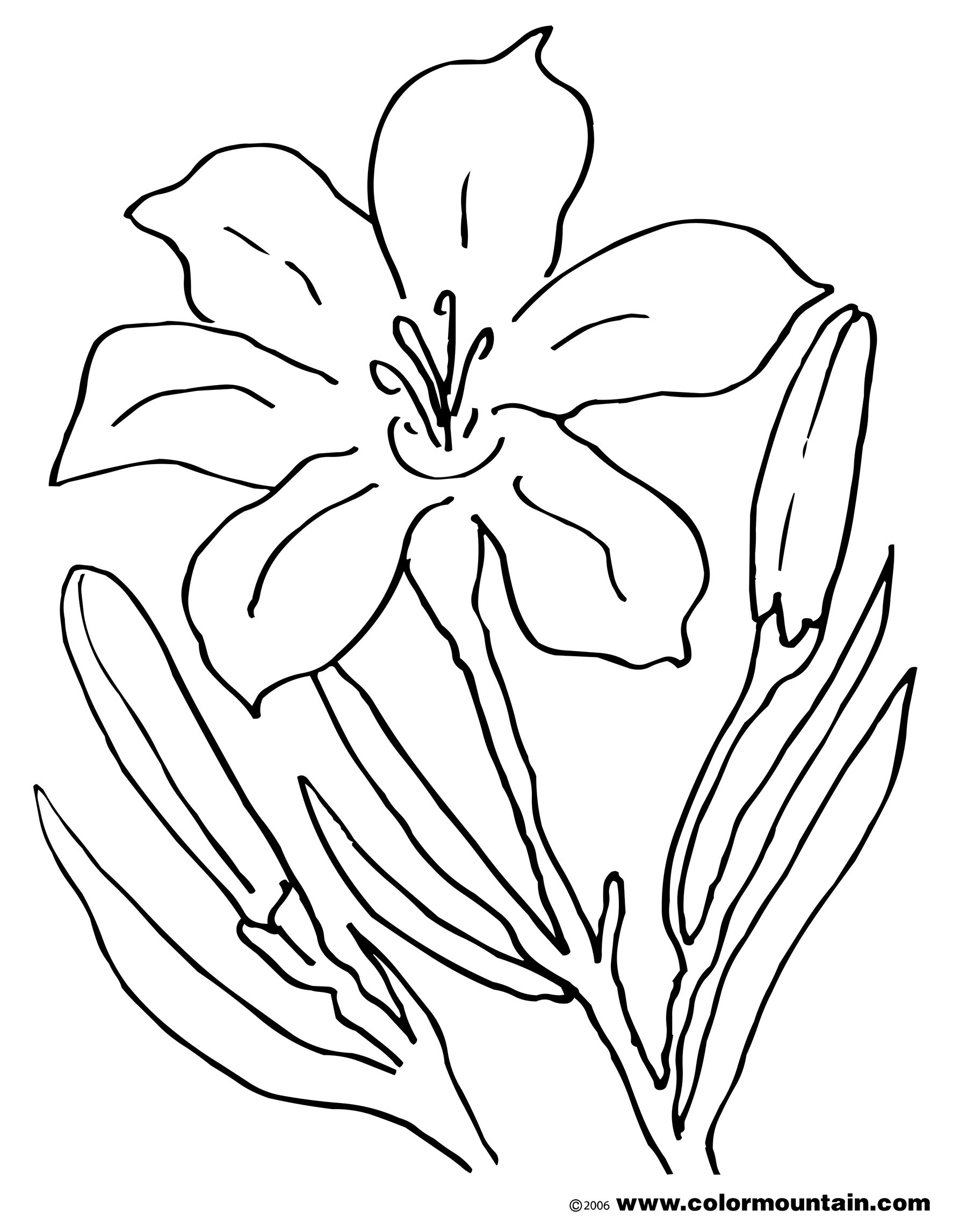 easter lily coloring pages - photo#26