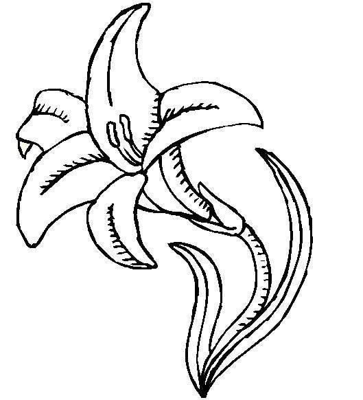 529x582 Lily Coloring Page Flower Drawings And Flowers