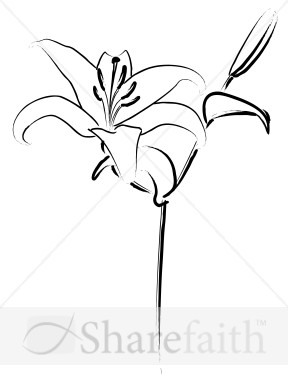 288x388 Easter Lily Line Art Easter Clipart